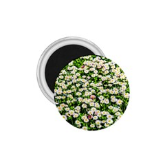 Green Field Of White Daisy Flowers 1 75  Magnets by FunnyCow