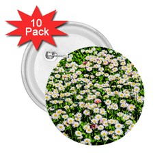Green Field Of White Daisy Flowers 2 25  Buttons (10 Pack)  by FunnyCow