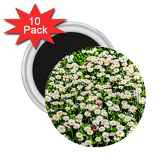 Green Field Of White Daisy Flowers 2 25  Magnets (10 Pack)  by FunnyCow