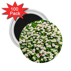 Green Field Of White Daisy Flowers 2 25  Magnets (100 Pack)  by FunnyCow