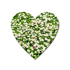 Green Field Of White Daisy Flowers Heart Magnet by FunnyCow