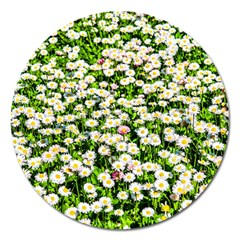 Green Field Of White Daisy Flowers Magnet 5  (round) by FunnyCow