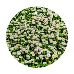 Green Field Of White Daisy Flowers Round Ornament (two Sides) by FunnyCow
