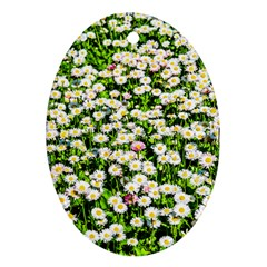 Green Field Of White Daisy Flowers Oval Ornament (two Sides) by FunnyCow