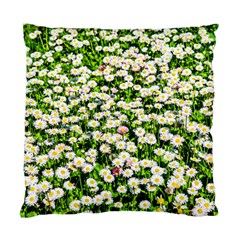 Green Field Of White Daisy Flowers Standard Cushion Case (two Sides) by FunnyCow