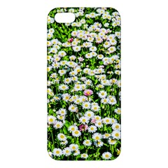 Green Field Of White Daisy Flowers Apple Iphone 5 Premium Hardshell Case by FunnyCow