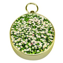 Green Field Of White Daisy Flowers Gold Compasses by FunnyCow