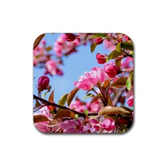 Crab Apple Blossoms Rubber Square Coaster (4 Pack)  by FunnyCow