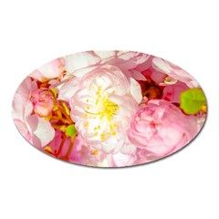 Pink Flowering Almond Flowers Oval Magnet by FunnyCow