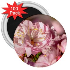 Beautiful Flowering Almond 3  Magnets (100 Pack) by FunnyCow