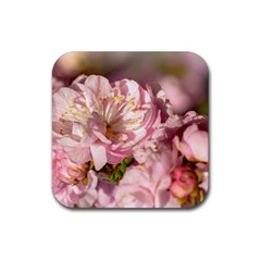 Beautiful Flowering Almond Rubber Square Coaster (4 Pack)  by FunnyCow
