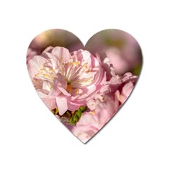 Beautiful Flowering Almond Heart Magnet by FunnyCow
