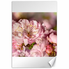 Beautiful Flowering Almond Canvas 20  X 30   by FunnyCow