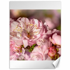 Beautiful Flowering Almond Canvas 36  X 48   by FunnyCow