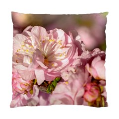 Beautiful Flowering Almond Standard Cushion Case (one Side) by FunnyCow