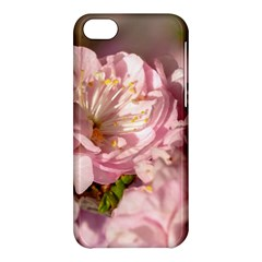 Beautiful Flowering Almond Apple Iphone 5c Hardshell Case by FunnyCow