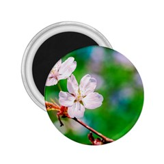 Sakura Flowers On Green 2 25  Magnets by FunnyCow