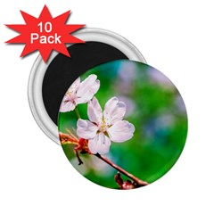 Sakura Flowers On Green 2 25  Magnets (10 Pack)  by FunnyCow
