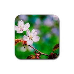 Sakura Flowers On Green Rubber Square Coaster (4 Pack)  by FunnyCow