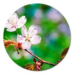 Sakura Flowers On Green Magnet 5  (round) by FunnyCow