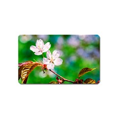 Sakura Flowers On Green Magnet (name Card) by FunnyCow
