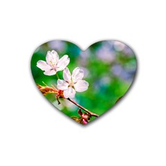 Sakura Flowers On Green Heart Coaster (4 Pack)  by FunnyCow