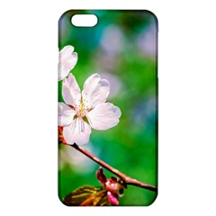 Sakura Flowers On Green Iphone 6 Plus/6s Plus Tpu Case by FunnyCow