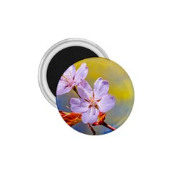Sakura Flowers On Yellow 1 75  Magnets by FunnyCow