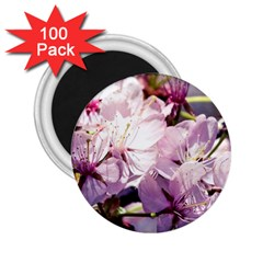 Sakura In The Shade 2 25  Magnets (100 Pack)  by FunnyCow
