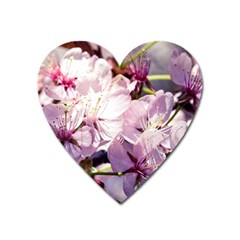Sakura In The Shade Heart Magnet by FunnyCow