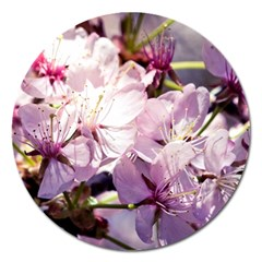 Sakura In The Shade Magnet 5  (round) by FunnyCow