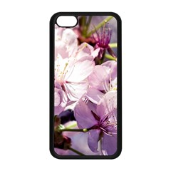 Sakura In The Shade Apple Iphone 5c Seamless Case (black) by FunnyCow