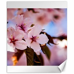 Three Sakura Flowers Canvas 8  X 10  by FunnyCow