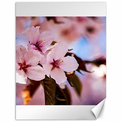 Three Sakura Flowers Canvas 12  X 16   by FunnyCow