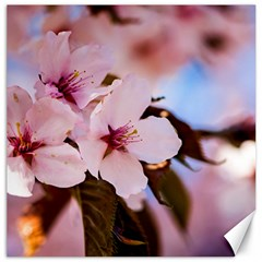 Three Sakura Flowers Canvas 20  X 20   by FunnyCow