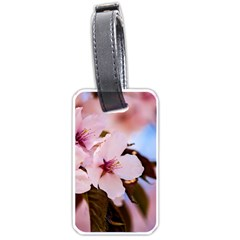 Three Sakura Flowers Luggage Tags (one Side)  by FunnyCow