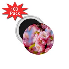 Flowering Almond Flowersg 1 75  Magnets (100 Pack)  by FunnyCow