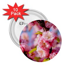 Flowering Almond Flowersg 2 25  Buttons (10 Pack)  by FunnyCow
