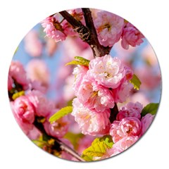 Flowering Almond Flowersg Magnet 5  (round) by FunnyCow