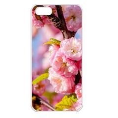 Flowering Almond Flowersg Apple Iphone 5 Seamless Case (white) by FunnyCow
