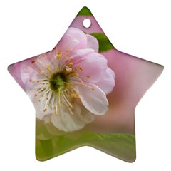 Single Almond Flower Ornament (star) by FunnyCow