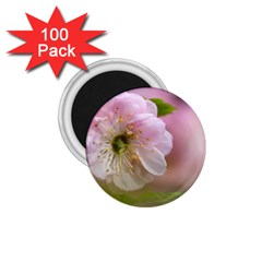 Single Almond Flower 1 75  Magnets (100 Pack)  by FunnyCow