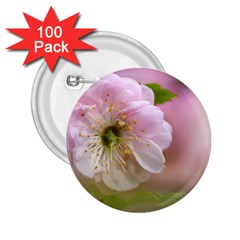 Single Almond Flower 2 25  Buttons (100 Pack)  by FunnyCow