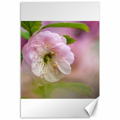 Single Almond Flower Canvas 12  X 18   by FunnyCow
