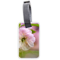 Single Almond Flower Luggage Tags (two Sides) by FunnyCow