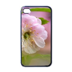 Single Almond Flower Apple Iphone 4 Case (black) by FunnyCow