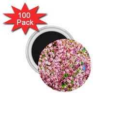 Almond Tree In Bloom 1 75  Magnets (100 Pack)  by FunnyCow
