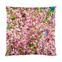Almond Tree In Bloom Standard Cushion Case (two Sides) by FunnyCow