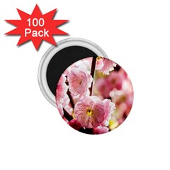 Blooming Almond At Sunset 1 75  Magnets (100 Pack)  by FunnyCow