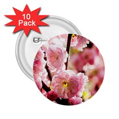 Blooming Almond At Sunset 2 25  Buttons (10 Pack)  by FunnyCow